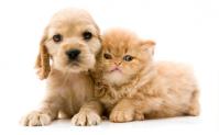 Gratis zak voer voor je puppy of kitten