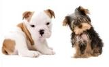 Gratis Pedigree puppypakket