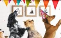 Gratis verjaardagsmaaltijd voor je hond